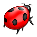 Animal, insect, bug, ladybird Black icon
