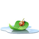 pool, water, Leaf, ladybird, Animal, insect Black icon