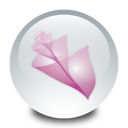 adobe, bridge Gainsboro icon