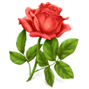 Flower, rose, plant Black icon
