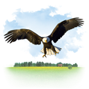 Animals, eagle SkyBlue icon