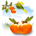 fruits, persimmon LightBlue icon