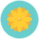 flowers, Aroma, nature, daisy, blossom, Flower MediumTurquoise icon