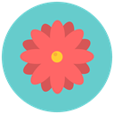 flowers, Flower, daisy, nature, blossom, Aroma MediumTurquoise icon