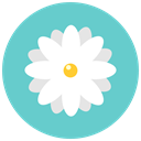 flowers, Aroma, chamomile, blossom, Flower, daisy, nature MediumTurquoise icon