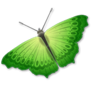 Animal, insect, butterfly Black icon