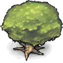 Tree DarkKhaki icon