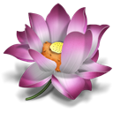 oriental, Flower, pink, icq, plant, lotus Black icon