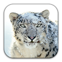 Snow, leopard DarkGray icon