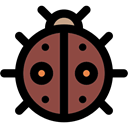 insect, bug, Animal Kingdom, ladybug, Animals Black icon