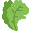 vegetable, salad, food, vegetables, Cabbages, Greens YellowGreen icon