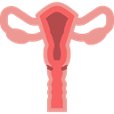 Uterus, Ovary, Ovaries, Reproductive System, Female Organs, Fallopian Tubes, medical, Anatomy Black icon
