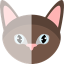 domestic, pet, Cat, kitty, Animal Kingdom, Feline, Animals Silver icon
