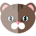 kitty, Animals, domestic, pet, Animal Kingdom, Cat, Feline DimGray icon