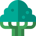 ecology, Botanical, Beech, nature, Tree DarkCyan icon
