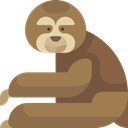 zoo, Animal, Wild Life, Animal Kingdom, Animals, sloth Peru icon