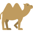 zoo, Animal Kingdom, Animal, Wild Life, Animals, Camel DarkKhaki icon