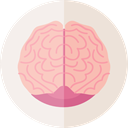 Brain, Body Part, Anterior Part, medical, Brain Anterior, people, Human Brain, Body Organ, Healthcare And Medical LightPink icon