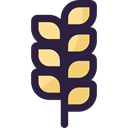 branch, food, nature, Barley, Cereal, Wheat, leaves, Food And Restaurant DarkSlateGray icon