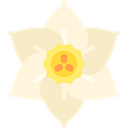 Jonquil, blossom, petals, nature, Botanical, Flower Cornsilk icon