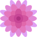 Botanical, blossom, Flower, Chrysanthemum, petals, nature Plum icon
