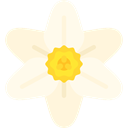 nature, Botanical, blossom, petals, Flower, narcissus FloralWhite icon