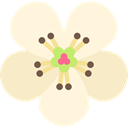 Botanical, nature, blossom, Flower, petals, pear Cornsilk icon
