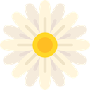 Botanical, nature, daisy, blossom, petals, Flower Cornsilk icon