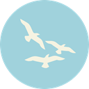 seagull, Beak, nature, fly, Animals, fauna, Feather LightBlue icon
