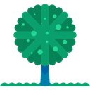 yard, Botanical, Tree, nature, garden, gardening, ecology DarkCyan icon