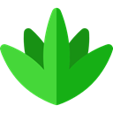 plant, Silhouette, nature, Mexico, Plants, Mexican, Mexico Icons, Agave, Agaves ForestGreen icon