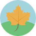 maple leaf, Botanical, plant, Leaf, nature, garden LightBlue icon