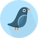Animals, Wild Life, Animal, bird PaleTurquoise icon