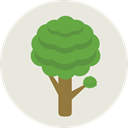Tree, nature, garden, Forest, Pine, trees, yard, Botanical Gainsboro icon