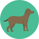 Animal, dog, pet, Animals, mammal, Breed CadetBlue icon