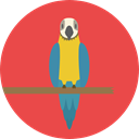 bird, zoo, parrot, Animals, Wild Life, Animal Kingdom Tomato icon
