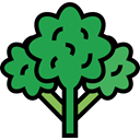 food, Supermarket, vegetable, vegetables, Foods, vegetarian, vegan, Broccoli, Healthy Food, Food And Restaurant SeaGreen icon