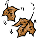 maple, autumn, Botanical, fall, Leaf, nature Black icon