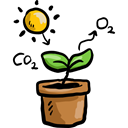plant, sun, education, nature, Biology, Co2, Photosynthesis Black icon