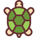 pet, Animals, reptile, tortoise, Amphibian SaddleBrown icon