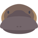 Animal, zoo, Animals, mammal, wild, wildlife, Platypus DimGray icon