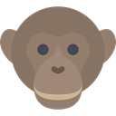 Animal, zoo, Animals, mammal, wild, wildlife, Chimpanzee Gray icon