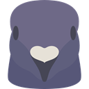 bird, Animals, dove, Wild Life, Animal Kingdom SlateGray icon