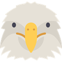 bird, Pray, eagle, Animals, Animal, wild, wildlife Gainsboro icon