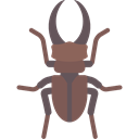 Animal, insect, Animals, beetle, wild, wildlife DimGray icon