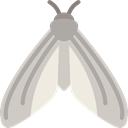 insect, butterfly, Animals, Moths LightGray icon