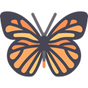 Animal, insect, butterfly, Animals, Pretty, wings DarkSlateGray icon