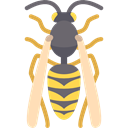 Animal, insect, wasp, Animals, wild, dangerous, wings, wildlife Black icon