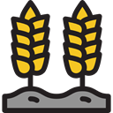 nature, Wheat, Grain, grains, Wheat Grain, Wheat Plant, Farming And Gardening, food Black icon