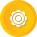 dsy, Flower, nature, flowers, Aroma, blossom Orange icon